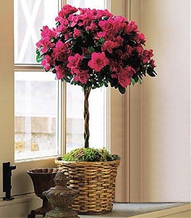 Самые красивые цветы в горшках